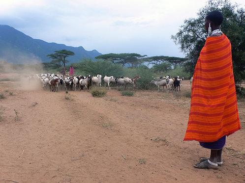 Africa  (Malawi/Zambia) - Goat