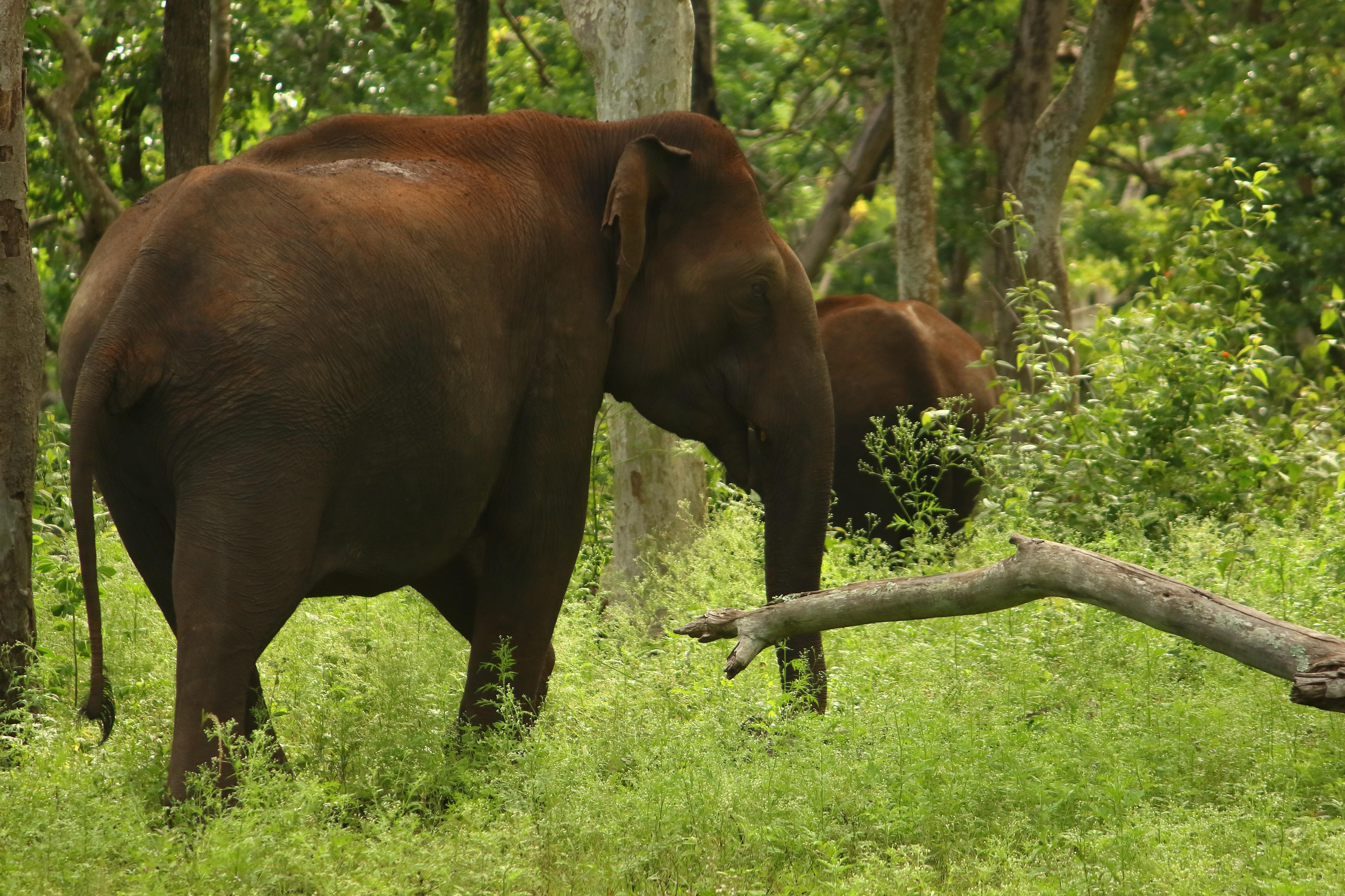 Image by Saketh Upadhya