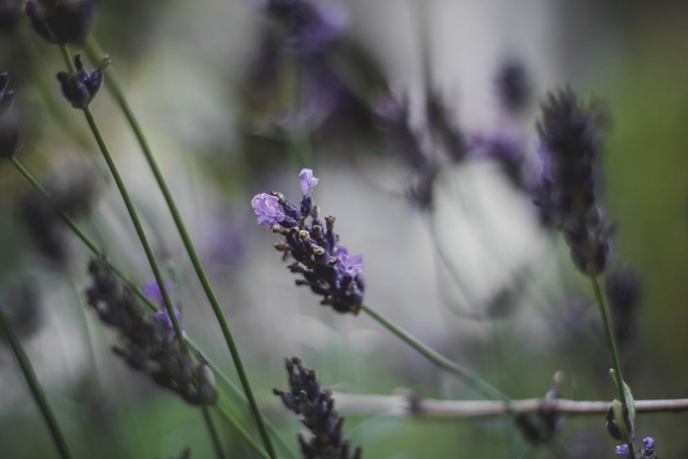 Lavender essential oil for mood enhancer