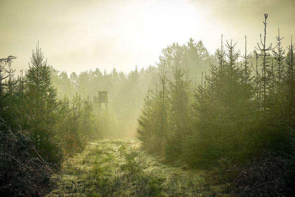 Image by Nicolai  Dürbaum