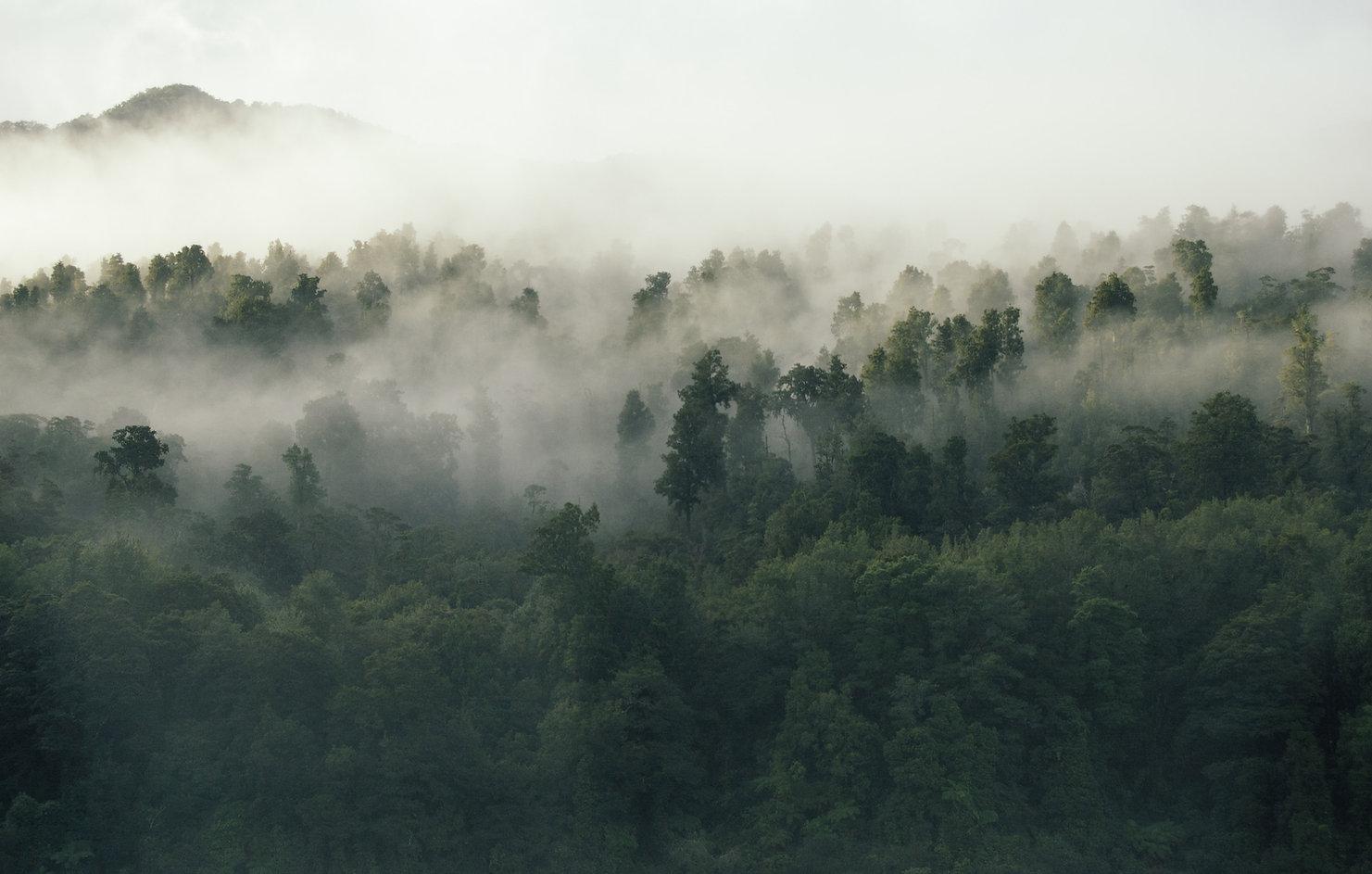 Image by Tobias Tullius