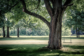 The Benefits of Trees