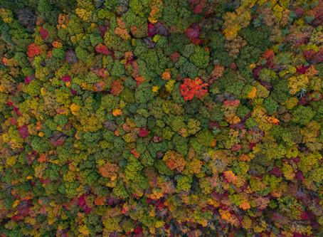 Intelligente Vermeidung von Waldzerstörung [DE]