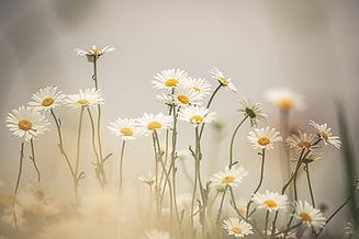 Image by Kristine Cinate