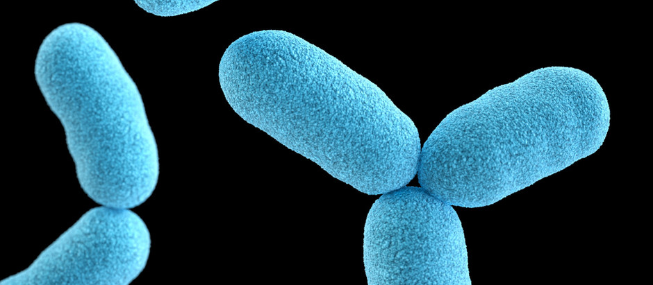How our gut bacteria affect our hormones