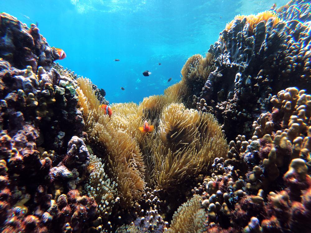 Snorkelling vs Scuba Diving!