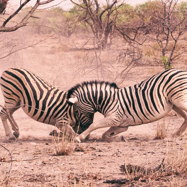 Namibia Überblick