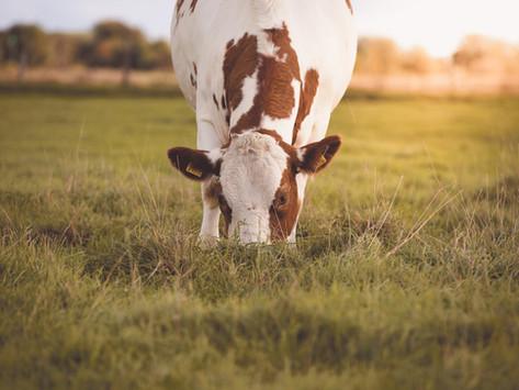 L'utilizzo degli acidi organici nell'alimentazione della vacca da latte