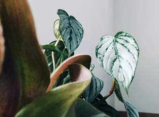 Finding Self-Care Through Horticulture