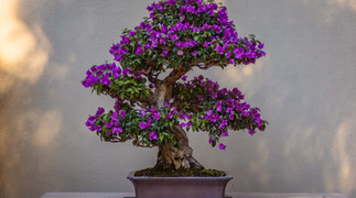 【BONSAI】盆栽サイズの大自然。フィリピン風盆栽で、心だけでも旅行気分