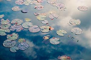 Image by Sora Sagano