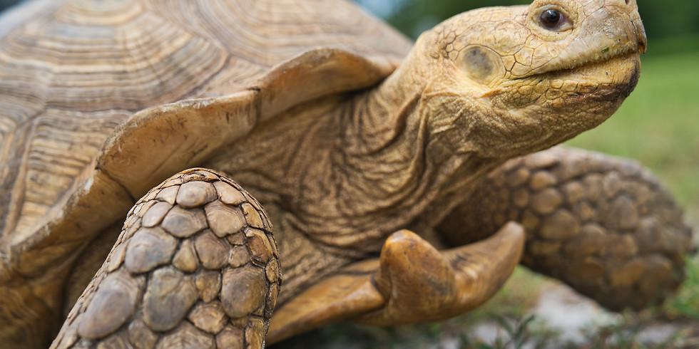 Spring Tortoise MOT