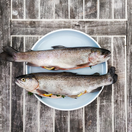 An Introduction and guide to Filleting and Fish Preparation