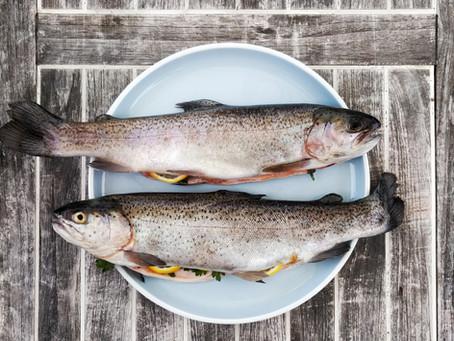 Frischer Fisch aus Niederösterreich