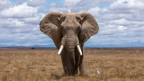 Das elefantöse Unterbewusstsein: Meine Erkenntnisse aus dem Coaching