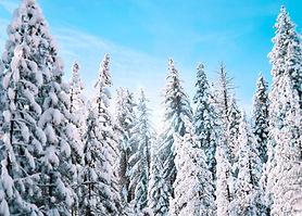 Snow trees burbank cryotherapy