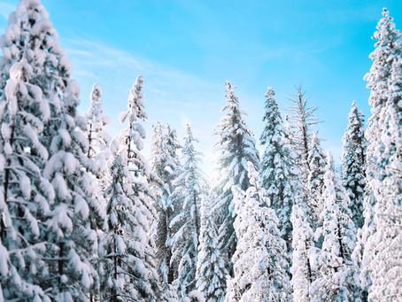 Heavy Snow Expected in Western Alberta