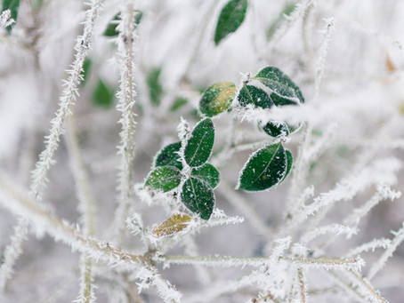 Winter Self-care with Traditional Chinese Medicine