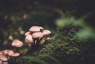 Image by Presetbase Lightroom Presets
