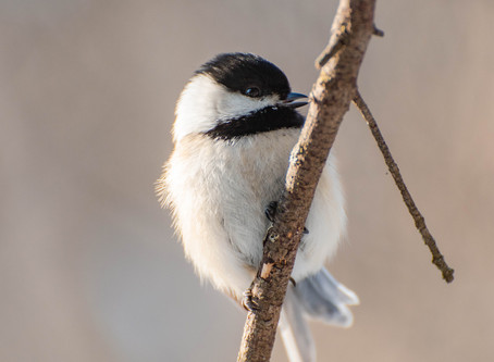 Nature Daily - Singing