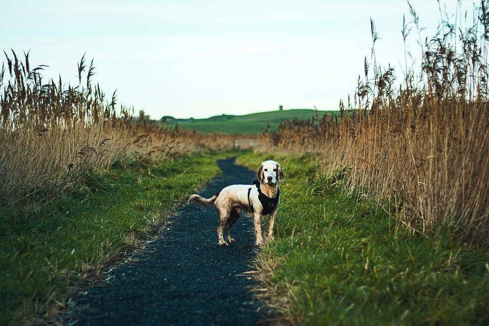 dog on trail helps you stay active