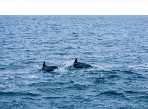 Quel a été l'impact du confinement sur la faune marine ?