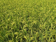 Cover crops | Rize ag