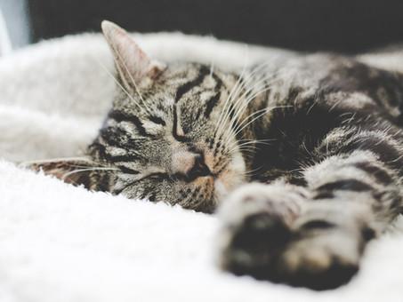 ショートスリーパーは健康?質の高い睡眠をとる秘訣