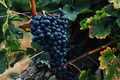 Vanorel - Les vins du Rhône