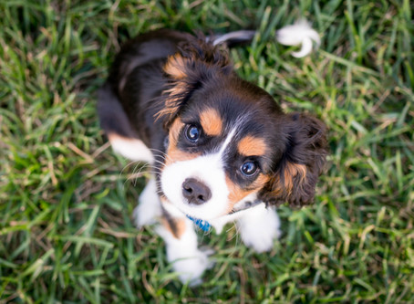 Potty Training Your Puppy