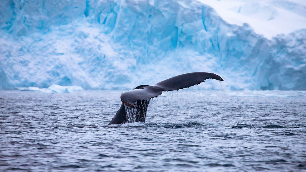 Discovering the White Continent - 11 Days