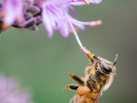 Inilah Jenis Lebah Sebagai Agen Penyerbuk Tanaman Terbaik Yang Tidak Banyak Diketahui!