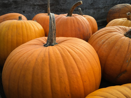 Happy (not scary) Halloween!