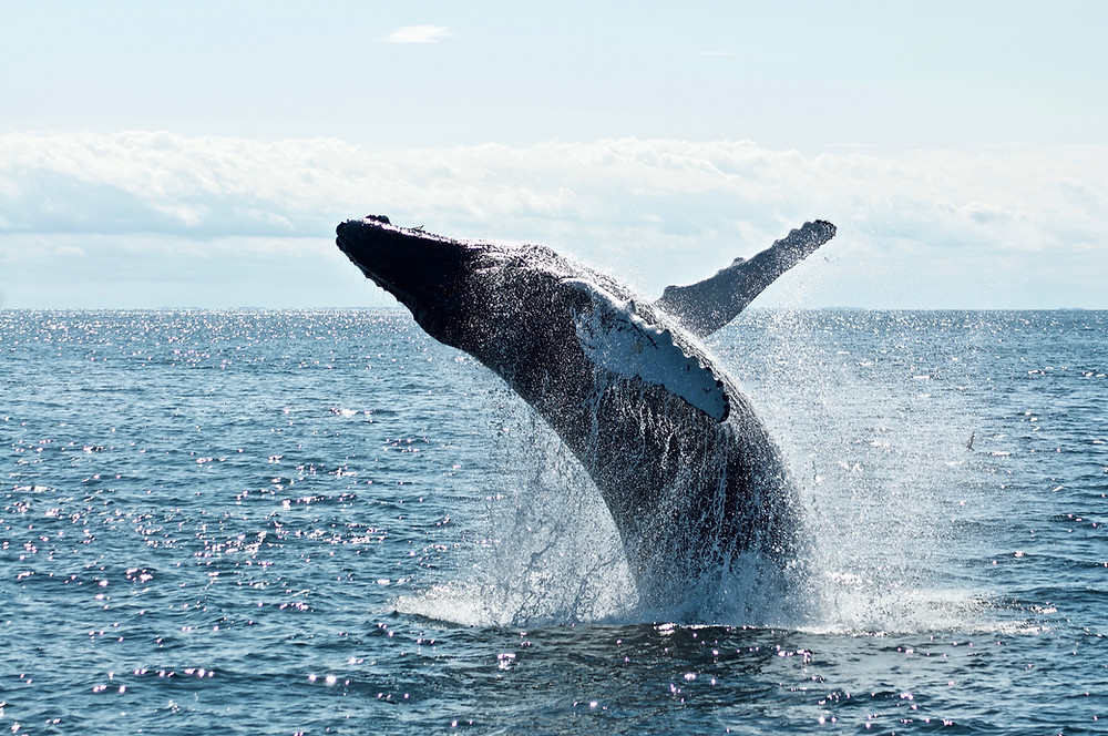 Whale watch Kaikoura, group tour to New Zealand
