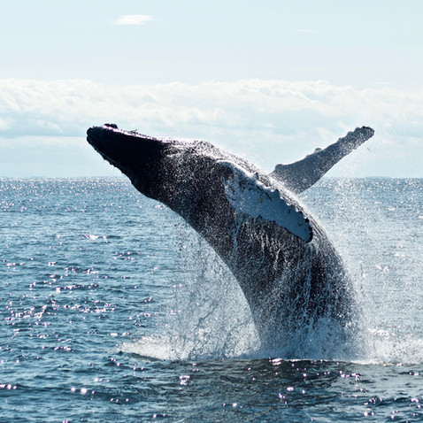 Whale watching and 2 Island Tour