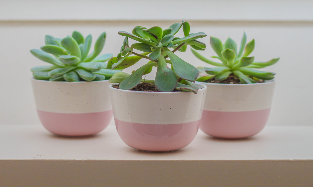 adorable succulents in pink pots lined up on windowsill