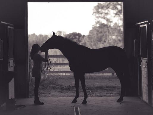 THE ELUSIVE WORK -LIFE (HORSE) BALANCE