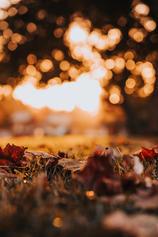 NOV. 25 — Thanksgiving
