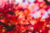 Screen Shot 2020-01-21 at 11.00.46 AM.pn