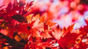Fall-Tastic Air  PLUS Fall Color Forecast