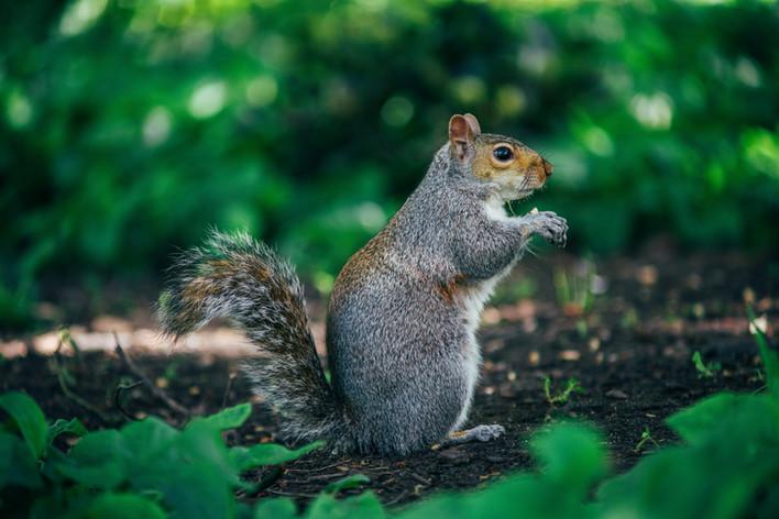 Wildlife in London park