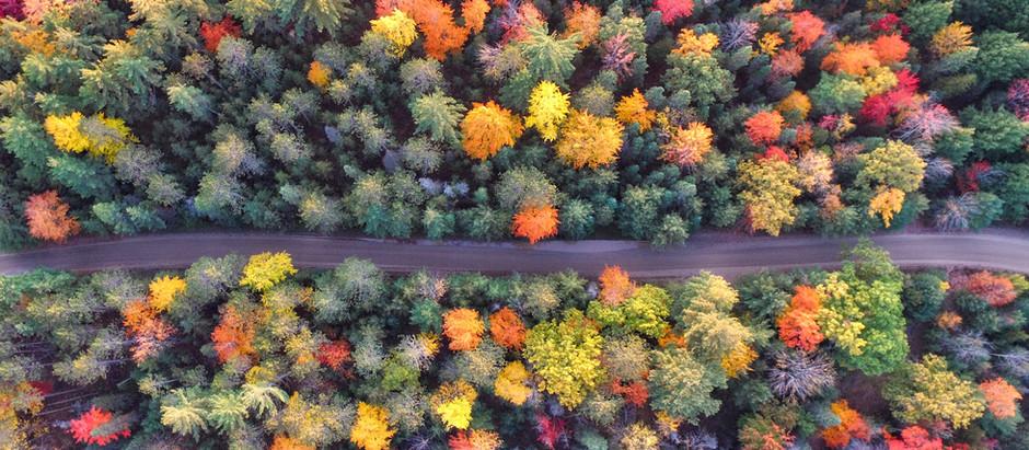 Fall Hikes & Drives - Madison & Company Properties