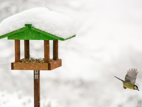 Deadly Bird Feeders - How to Keep Your Garden Birds Healthy