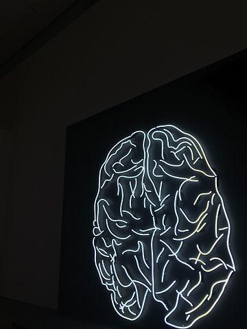 Brain-based Coaching (Neurokoučink)