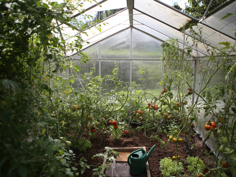 New Year, New Garden- What To Do in the Garden This Season
