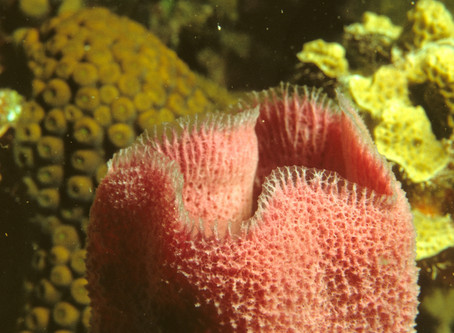 Sponges – the source of anti-cancer treatments?
