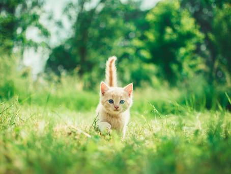 Kedilerin Kuyruk Hareketleri & Anlamları