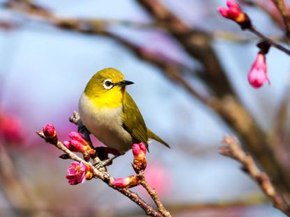 Primavera Silenciosa: Una Advertencia Ambiental Subestimada