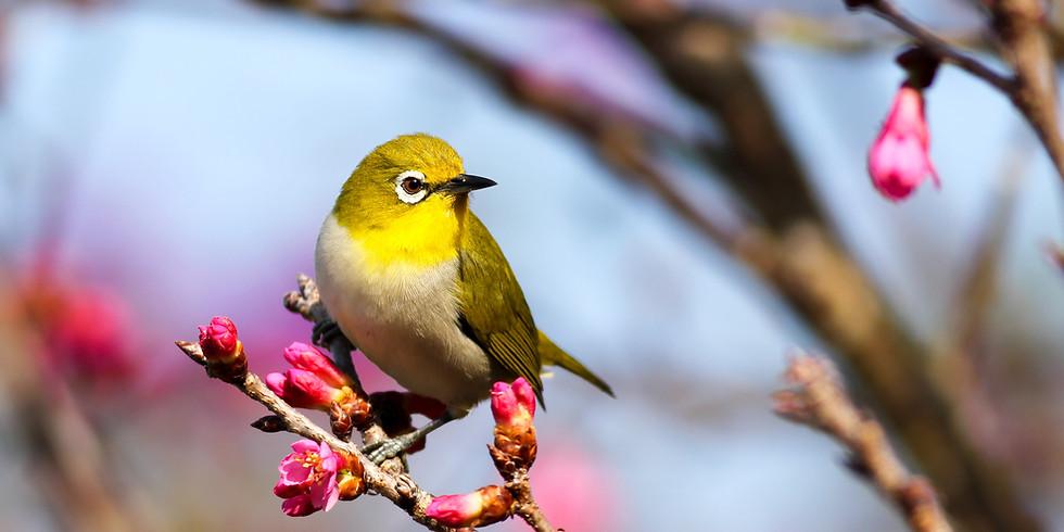 Spring Birdsongs with Neil Hayward