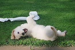 Puppy Training Calabasas Woodland Hills Chatsworth